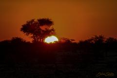 Sol poniéndose sobre fondo de acacias.