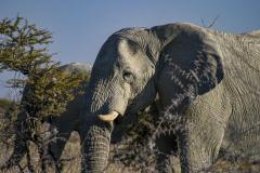 Cabeza de elefante en primer plano.