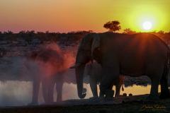 Elefantes bebiendo al atardecer. Contraluz.