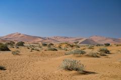 Vegetación baja en primer plano con acacias y dunas al fondo.