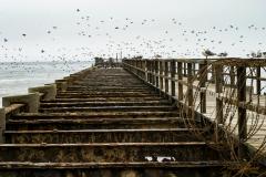 Vigas de un puente en la ciudad de  Swakopmund con gaviotas y cormoranes alrededor.