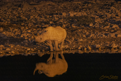 Rinoceronte bebiendo al borde de una charca de noche.
