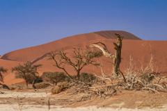 Vegetación baja en primer plano con dunas al fondo.
