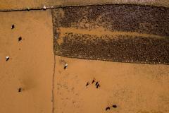 Arrozales en Antarisabe.