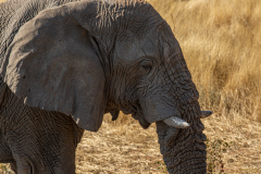 Cuernos de Elefante.