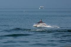 Delfin saltando.