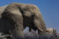Elefante.