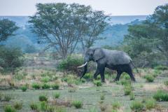 Elefante mojado